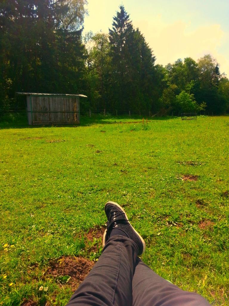 Jungpferdeausbildung ganz entspannt in der Sonne