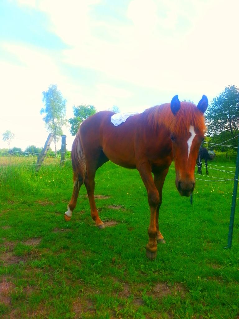 Jungpferdeausbildung muss sich nach dem Pferd richten
