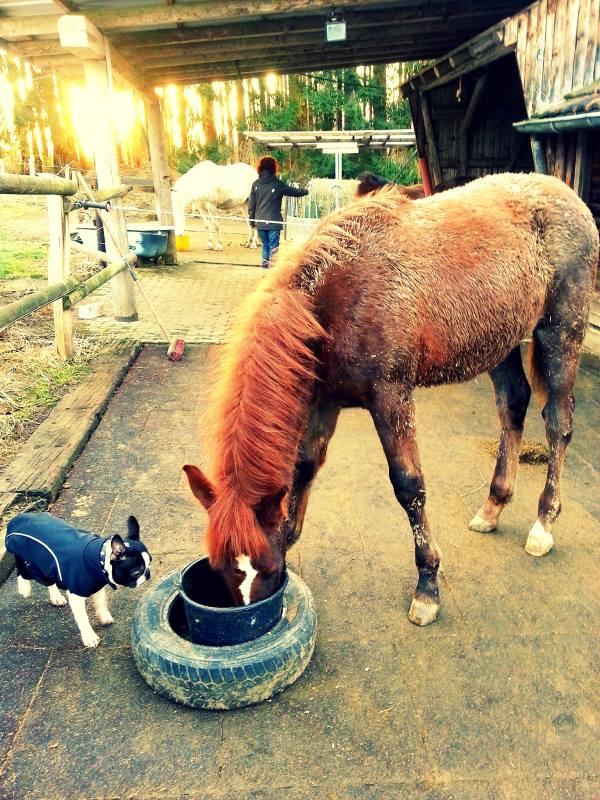essen und hunde